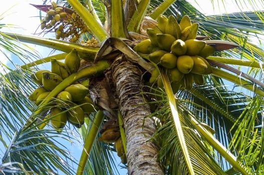 palmdrankie